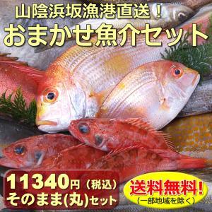 (送料無料)山陰浜坂港直送「朝とれおまかせ鮮魚・魚介10000円(税別)セット」 (海鮮 ギフト 魚介の詰め合わせ)|matubagani