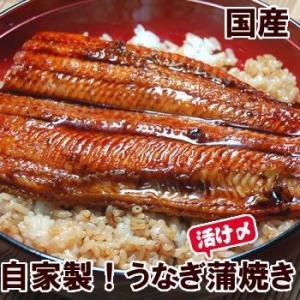 (スタミナ食)自家製 うなぎ蒲焼き(冷凍)250g以上の特大 1尾 (国産)タレ付 国内産の活きたうなぎを捌きました matubagani