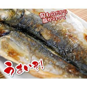天日干し「真鯵の開き」 (冷凍) 特大 1枚入り (アジ・あじ)|matubagani|05