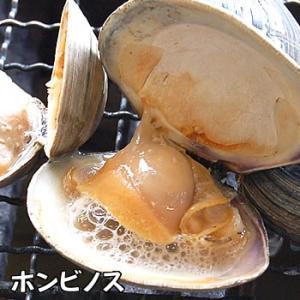 (送料無料)国産4種の海鮮バーベキューセット(冷凍)ホタテ(片貝)・サザエ・モサエビ、ホンビノスの4種入(さざえ、ほたて、帆立、bbq)|matubagani|07