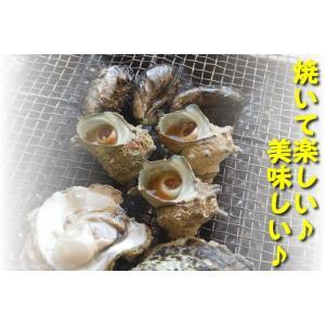 (送料無料)ホタテ(片貝)・サザエ・モサエビの3種海鮮バーベキューセット(冷凍)|matubagani|02