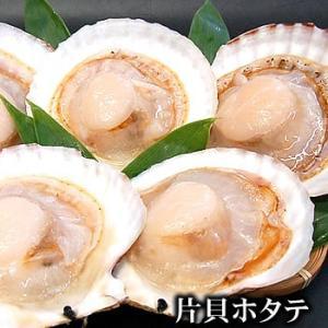 片貝ホタテ(冷凍)L 殻付き10枚入(冷凍)北海道産(ほたて、帆立、ハーフシェル)海鮮バーベキューに|matubagani