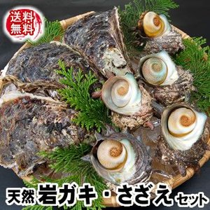 (送料無料)山陰の「岩がき・さざえ」天然もの詰合せセット(生食可)2セット以上のご注文でおまけ有♪  (岩牡蠣、岩かき、岩ガキ)|matubagani