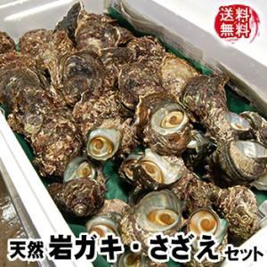 (送料無料)山陰の「岩がき・さざえ」天然もの詰合せ 各17個入(生食可) サザエは砂抜き済みのものを出荷します (岩牡蠣、岩かき、岩ガキ)|matubagani