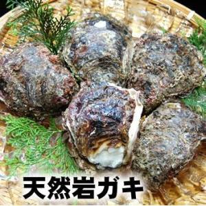 (送料無料)天然岩牡蠣(生) 約1kg(5個前後入)(生食可)(山陰沖産)(かき、カキ、イワガキ、いわがき、イワカキ、いわかき、岩がき、岩ガキ)|matubagani