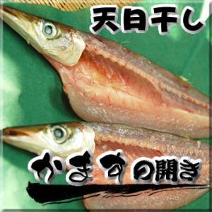 天日干し「カマス開き」(冷凍)大 1枚×約150-199g程度(浜坂産)(干物)|matubagani