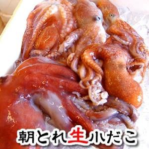 (旬もの予約・送料無料セール) 小だこ(蛸・たこ・タコ)(生) 約1kg程度(浜坂産)今が旬 2セットご注文で500g増量 (水だこ)(予約品) matubagani