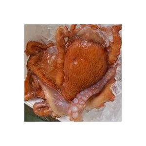 水たこ頭(生冷凍)約500-590g(内臓除去済) (浜坂産) タコ、ミズダコ