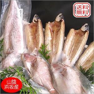 (送料無料)日本海漁火セット(冷凍)(アゴ,干物,白いか,鯛)お中元、バーベキューに |matubagani