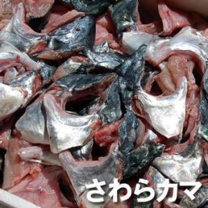 (送料無料セール)サワラのカマ(冷凍) 約1kg  (浜坂産)  (さわら、鰆)|matubagani