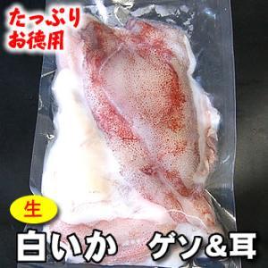 生白イカのゲソ&耳(冷凍) 約300g入(浜坂産)(白いか・しろいか・けんさき,バーベキューに)|matubagani