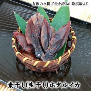 (メール便送料無料セール)素干しホタルイカ 100g入 (山陰浜坂産)(ほたるいか、ホタルイカ、生干し)|matubagani