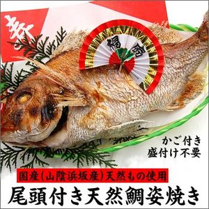 (送料無料)尾頭付き天然鯛(たい・タイ)の姿焼き 豪華にお祝いできる超特大サイズ 1匹(浜坂産)|matubagani