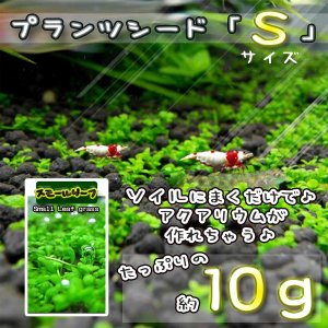No.1 プランツシード【S】 10g 水草 アクアリウム
