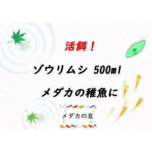ゾウリムシ(インフゾリア)500ml 説明書付き 生体