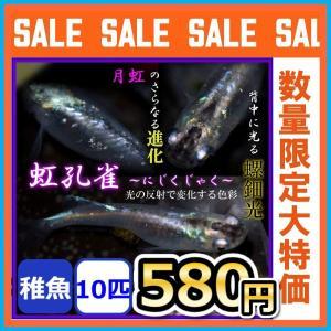 メダカ/孔雀 螺鈿光月虹めだか 稚魚10匹の画像