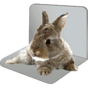 ハイペット ひや~っと気分L型固定式NEO 小動物用|mediaearth