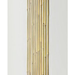 竹材 竹 女竹 防虫処理 1950 x9~10φ mm