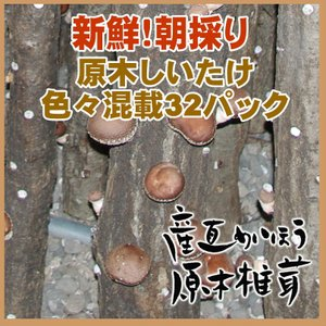 「ぷりっぷり肉厚」「弾力ある歯ごたえ」「上品な香り」が特徴!(椎茸 しいたけ)こだわりの原木栽培しい...