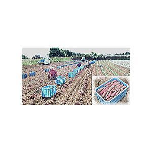 さつまいも 福井県産 サツマイモ とみつ金時 お試し 1kg さつま芋 薩摩芋  昔ながらの ほのかな甘味とふっくら食感が特徴です|meisankobo|04