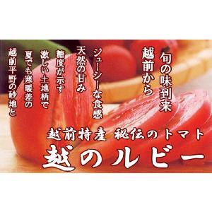 福井県産 ブランド とまと 越のルビー 高級ブランドトマト 生トマト 約900g入 高栄養 高糖度のミディトマト 越のルビ 福井産|meisankobo|02