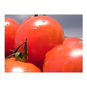 福井県産 ブランド とまと 越のルビー 高級ブランドトマト 生トマト 約900g入 高栄養 高糖度のミディトマト 越のルビ 福井産|meisankobo|03