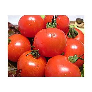 福井県産 ブランド とまと 越のルビー 高級ブランドトマト 生トマト 約900g入 高栄養 高糖度のミディトマト 越のルビ 福井産|meisankobo|04