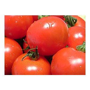 福井県産 ブランド とまと 越のルビー 高級ブランドトマト 生トマト 約900g入 高栄養 高糖度のミディトマト 越のルビ 福井産|meisankobo|06