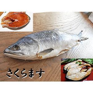 さくらます 塩ます 1尾入 サクラマス さくら鱒 桜鱒 塩鱒 塩マス 塩 ます 塩 マス塩 鱒 ます寿し ますの寿し 鱒の寿司 の材料に|meisankobo