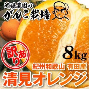 清美 オレンジ 8.0kg 果物 フルーツ 柑橘...の商品画像