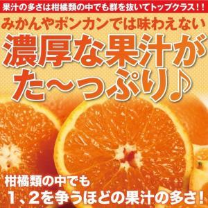 清美 オレンジ 8.0kg 果物 フルーツ 柑...の詳細画像1