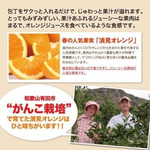 清美 オレンジ 8.0kg 果物 フルーツ 柑...の詳細画像3