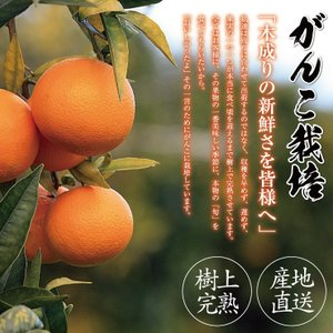 清美 オレンジ 8.0kg 果物 フルーツ 柑...の詳細画像4