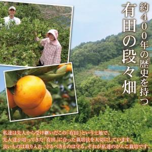 清美 オレンジ 8.0kg 果物 フルーツ 柑...の詳細画像5