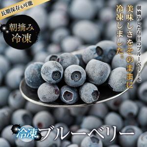 【冷凍】 ブルーベリー 紀州 和歌山 有田産 フレッシュブルーベリー 1kg (1キロ) 減農薬 産地直送 自宅用 国産 果物 フルーツ
