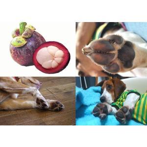 犬・猫用 無添加 肉球ケアクリーム 「PETVEDA コクムバター 肉球クリーム 大容量 50g」|meltinpot|02