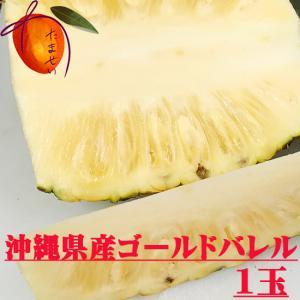 【発送7〜8月】【規格外・訳あり】 話題の黄金のパイン・ゴールドバレル  1玉(約1kg〜) 芯まで極甘【パイナップル】