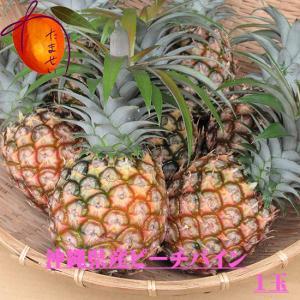 西表島産ピーチパイン1玉【約800g〜1kg】【発送4〜8月】パイナップル