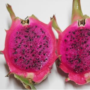 ドラゴンフルーツ(ピタヤ)は、サボテンの一種で亜熱帯の島、沖縄県での栽培が盛んなフルーツとして知られ...