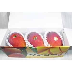 沖縄県産 完熟マンゴー 約1.5kg 【送料無料】 【優品】...