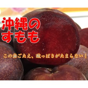 【発送5月下旬〜6月上旬】 沖縄県産 すもも 1kg  花螺李(ガラリ/カラリ)