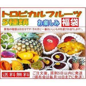 トロピカルフルーツ5種類5000円コース 【送料無料】 お任せフルーツ5種類 (フルーツセット 沖縄果物 マンゴー パパイヤ)