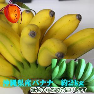 【発送7月〜11月】 沖縄県産バナナ「ゴールデンスイートバナナ」約2kg