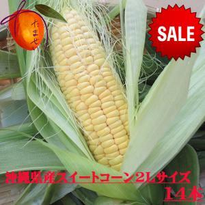 【発送11月〜5月】 沖縄県産スイートコーン・2L・14本 ...