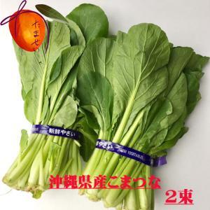 沖縄県産野菜  小松菜 1kg 【発送時期年中、お待たせするとき有】