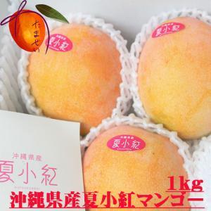 夏小紅マンゴー 約1kg(2〜4個)【発送8月中旬〜9月初】 新種稀少マンゴー