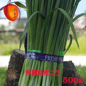 安心・フレッシュ沖縄県産野菜  ニラ 約500g 【発送 年中ですが、お待たせする場合有】