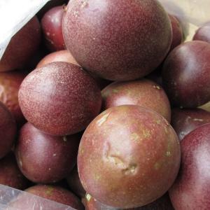 パッションフルーツ(家庭用バラ)約2kg 【発送2〜7月】   (スムージー ヨーグルト)