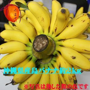 【発送5月〜11月上旬】  沖縄県産 島バナナ 約2kg   市場に出回らない希少な「幻の島バナナ」 【原則緑色のバナナ発送】 【配達日指定不可】