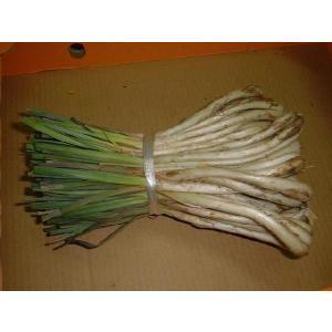 沖縄産島らっきょう1kg 強い香りと辛味がある沖縄のらっきょうです。 ※沖縄で栽培されているらっきょ...